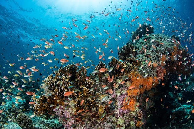 Marine Protected Areas overlook a large fraction of biodiversity hotspots