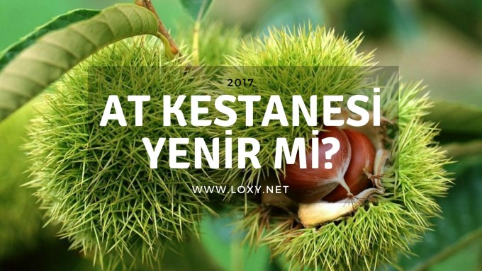 at kestanesi yenir mi
