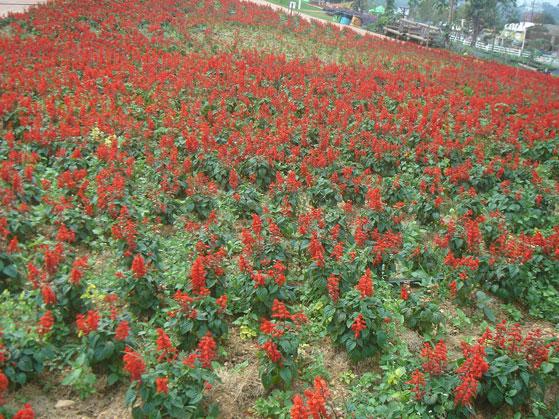 Flora Parkวังน้ำเขียว ฟลอร่า แฟนตาเซีย จ.นครราชสีมา