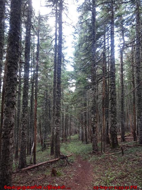 Bald Mountain Ridge Hike