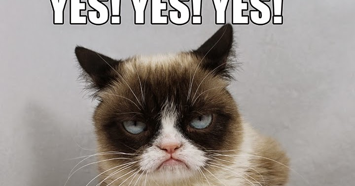 Perpetually Speaking Grumpy Cat And The Wwe