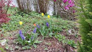 bahçe-bahar-çiçek