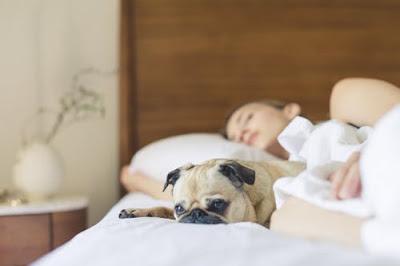 Konsep Dasar Istirahat dan Tidur