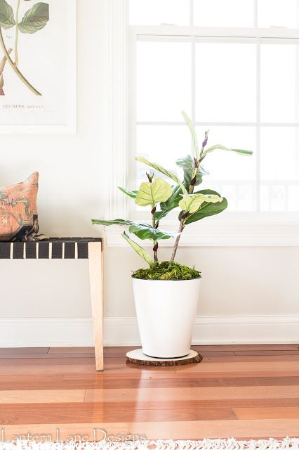 how to make your own fiddle leaf fig plant/