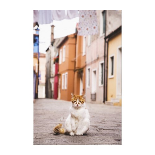 Cat on the Street in Burano, Italy | Feline Portrait Canvas