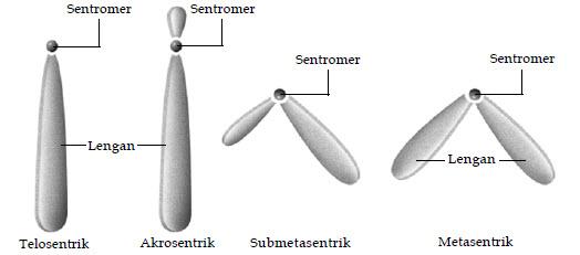 sentromer