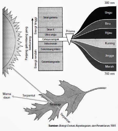 merupakan proses penyusunan materi anorganik menjadi materi organik Fotosintesis