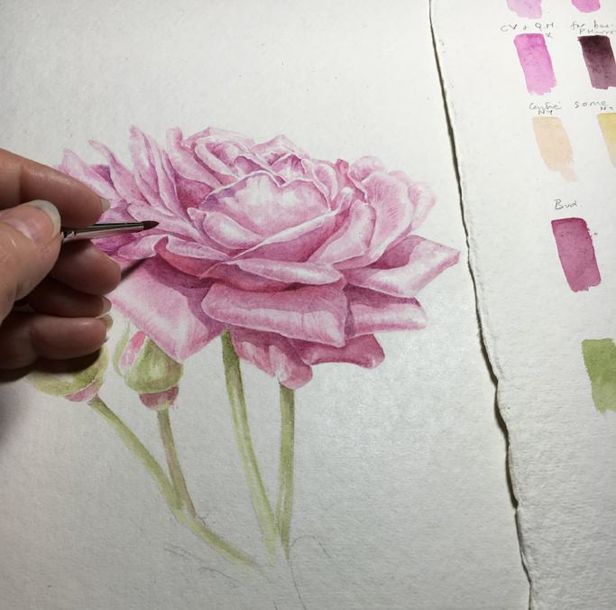 Showing painting of a pink rose