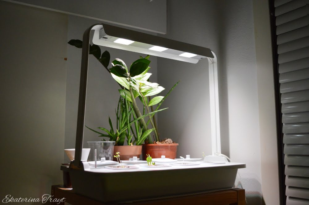 Forest Lair: IKEA Hydroponic Indoor Garden [Daily Photo #192]