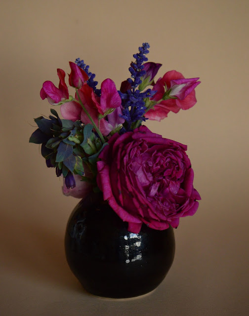 monday vase meme, sweet peas, cerinthe, salvia, small sunny garden, desert garden, arizona garden, amy myers, rose, english rose, david austin, william shakespeare 2000