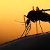Fake news tiveram influência na vacinação contra a febre amarela no Brasil