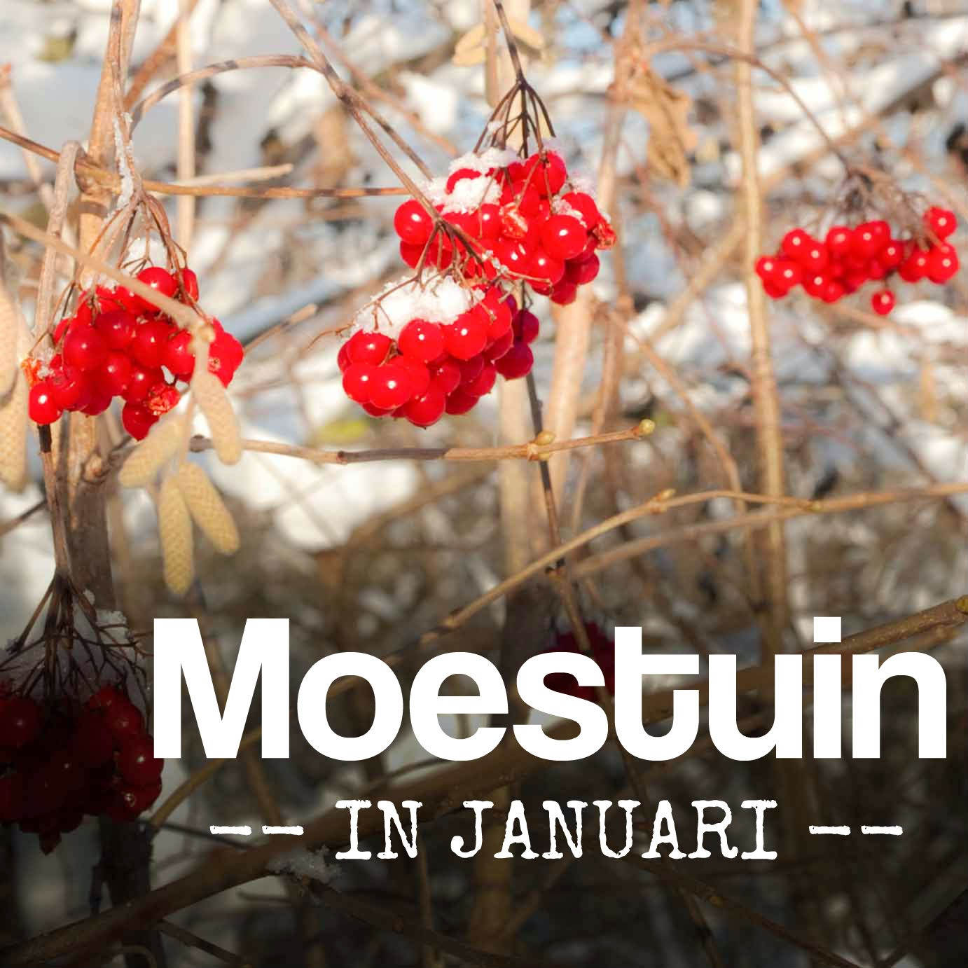 tips moestuin in januari