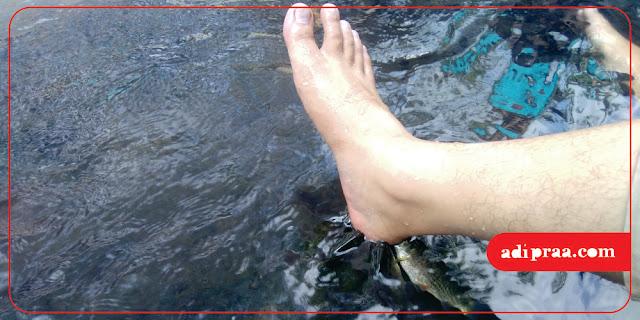Terapi Ikan | adipraa.com