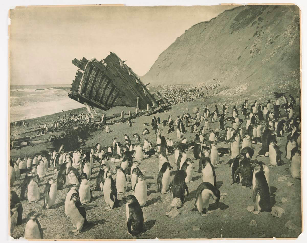 27 Rare Pictures of the First Australasian Expedition to Antarctica in 1911