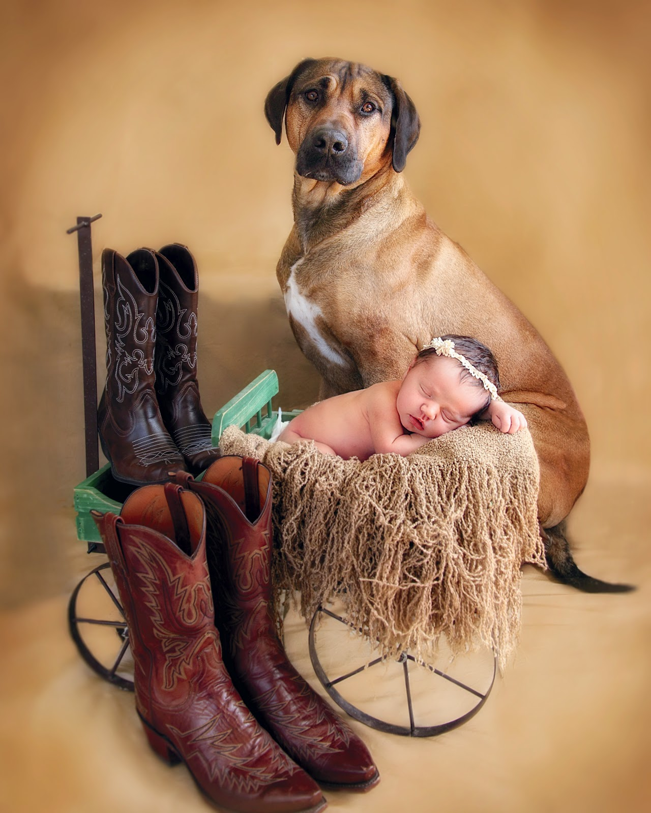 Welcome to Images of Sommer: Babies are going to the dogs!