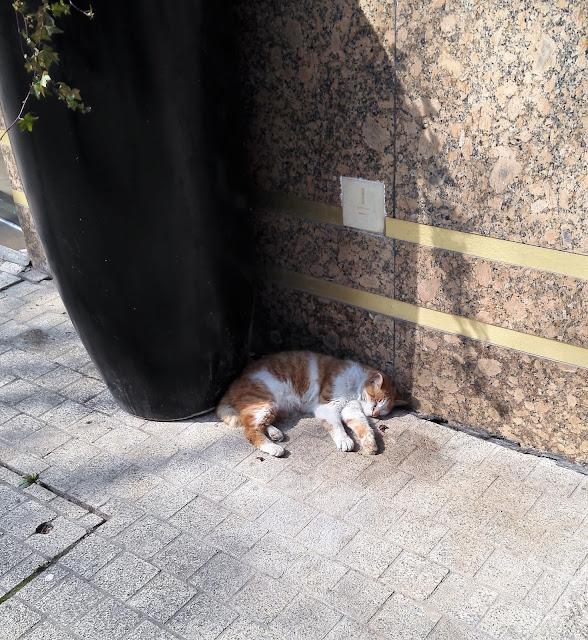 死んだように眠る猫