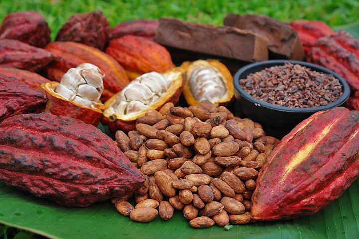 Cacao, frutos y semillas - Revista agrofertil