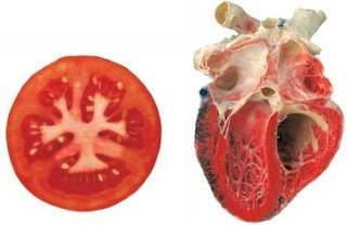 Tomato is linked with Heart