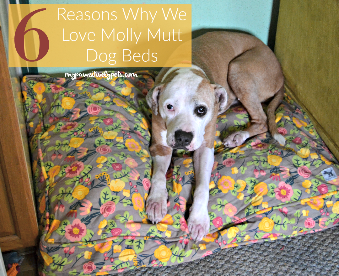 6 reasons why we love molly mutt dog beds   pawsitively pets