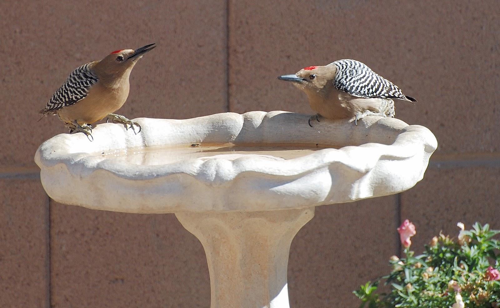 Birding Is Fun!: Birding is Fun Wherever You Are