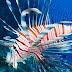 Το δηλητηριώδες λεοντόψαρο στις ελληνικές θάλασσες, εκτοπίζει τον ροφό