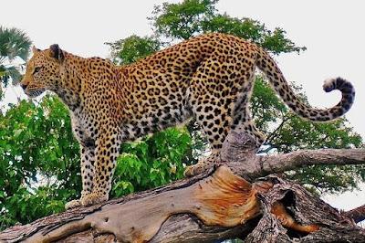 tempat wisata di Garut kebun binatang Cikembulan