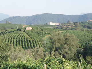 The vine-clad hills around Valdobbiadene, home of Italy's finest Prosecco wines