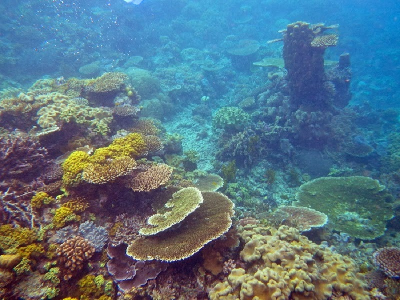 The Great Barrier Reef, Queensland - 10 Reasons Why You Should Visit Australia!