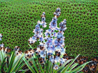 Hyacinth - deeper yet