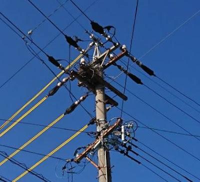 カラスが電柱に巣を作っている!防除テスト日記①