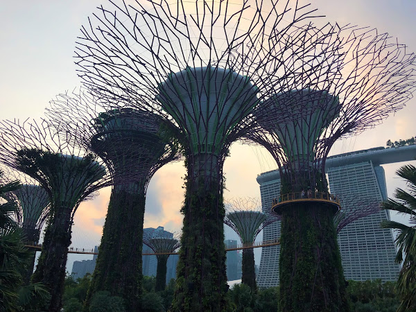 Random Lessons From Singapore