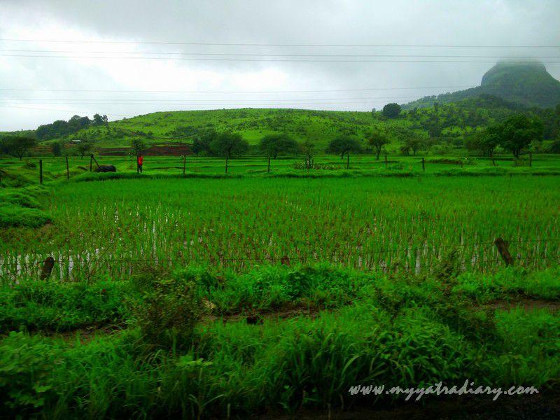 Lovely views on the Trimbakeshwar -Ghoti road near Nashik, Maharashtra