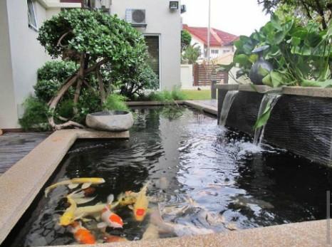 jasa pembuatan kolam koi gresik spesialis pembuatan kolam