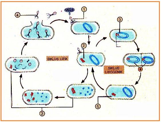 FBS EDUKASI: PENGERTIAN DAN SEJARAH VIRUS