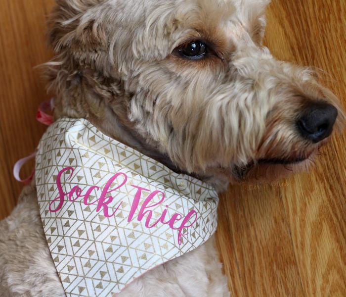 Pitterandglink Diy Personalized Reversible Dog Bandana