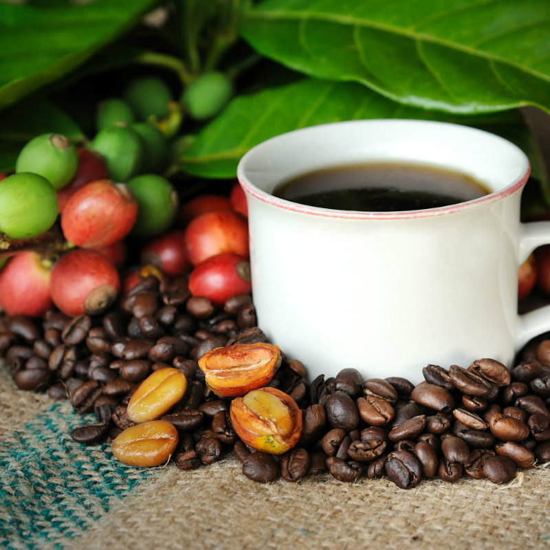 coffee, coffee cherries, coffee beans, kona