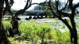 Ponte no Salto do Rio Caveiras, em Lages