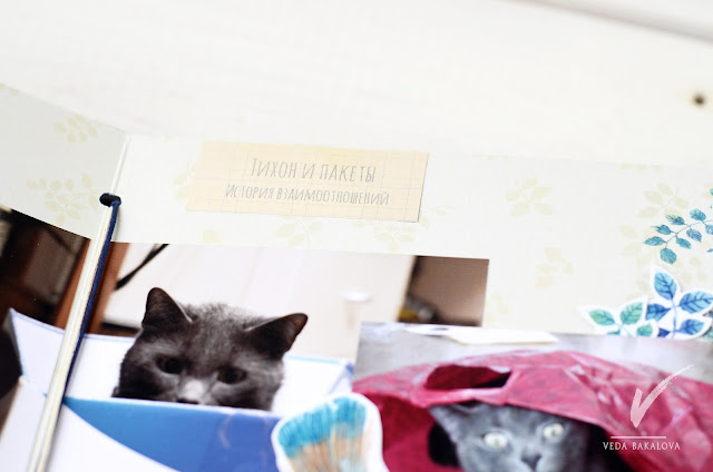 @veda_bakalova #скрапбукинг #веда #ведабакалова #котики #альбомпрокота #альбомсвоимируками #фотоальбом