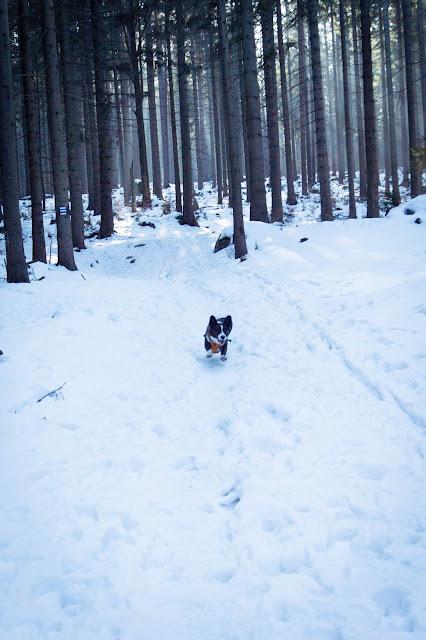 spacer z psem, w góry z psem, Karkonosze z psem
