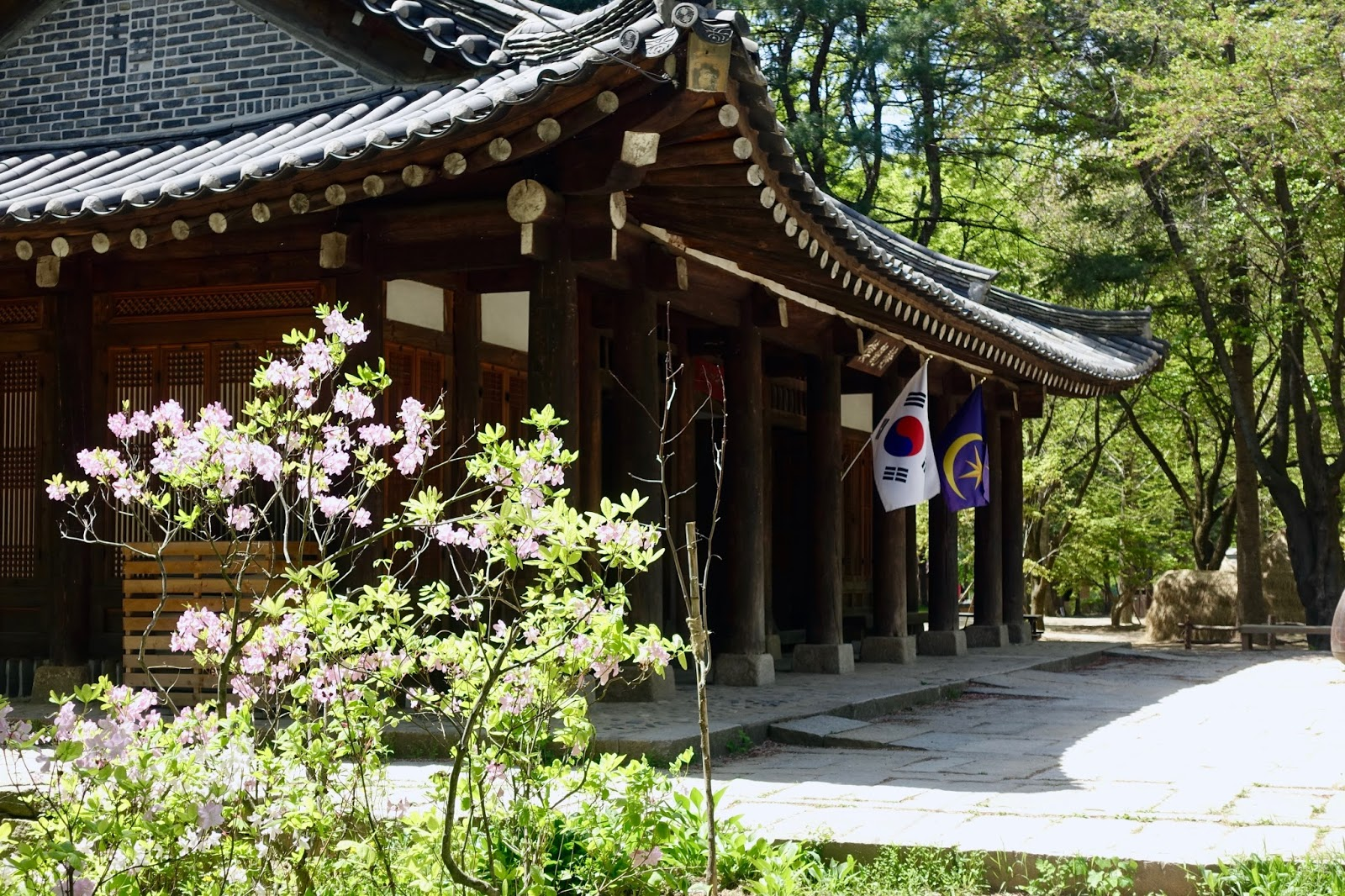 NAMI ISLAND, KOREA spring