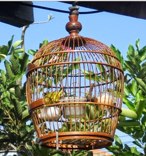sekarang saatnya kami menyebarkan warta mengenai burung kacamata ini MANFAAT MENGGANTANG BURUNG PLECI