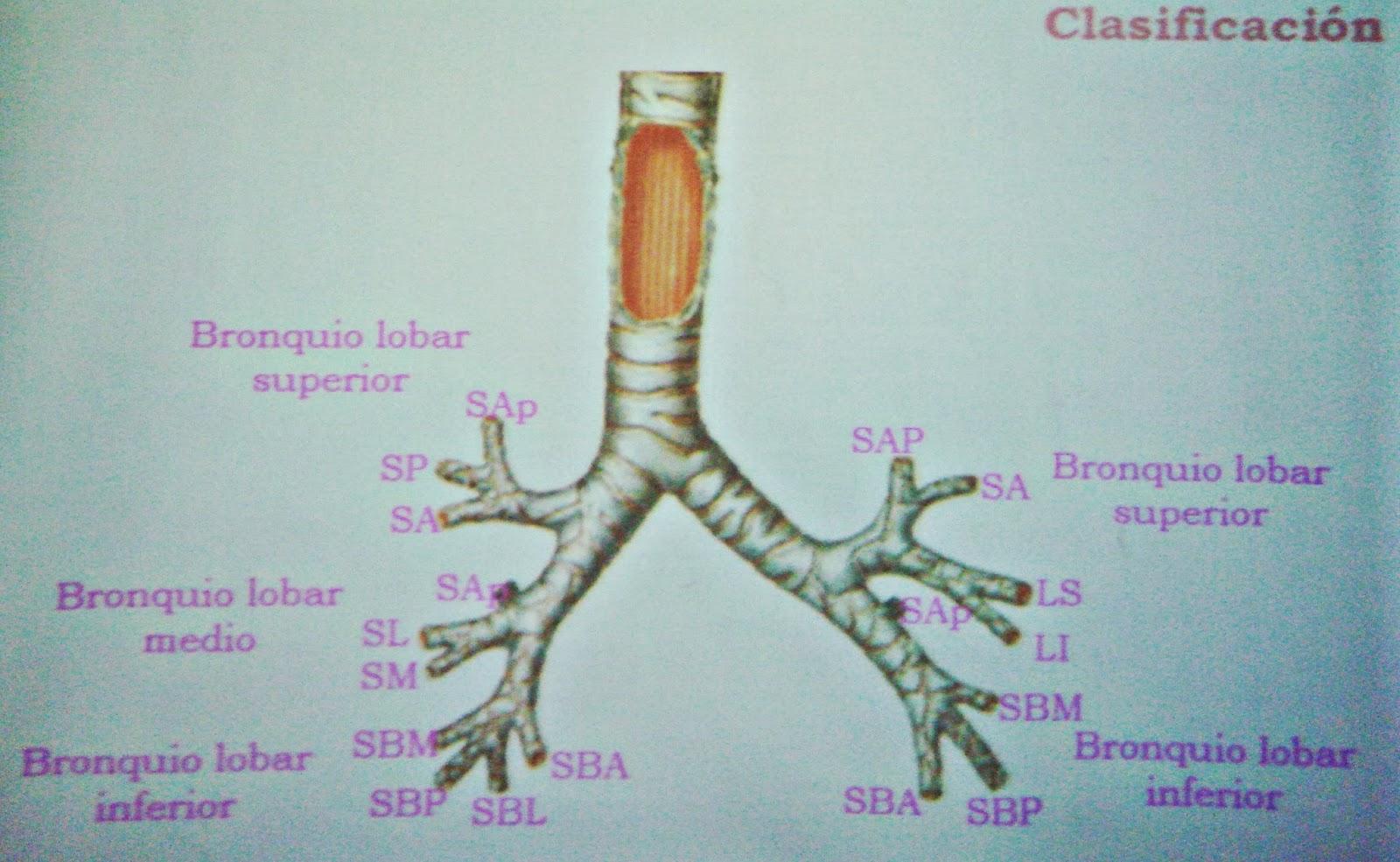 AMIGOS PARA SIEMPRE: Apuntes de anatomía humana general
