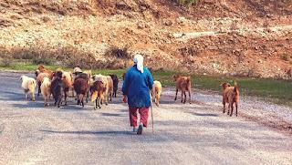 Uwais sang penggembala kambing