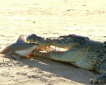 Crocodiles Sex 97