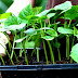 Los cultivos orgánicos nos salvarán la vida