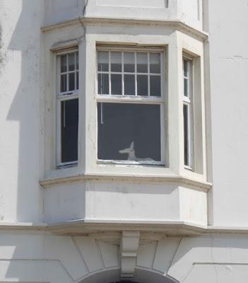 canidé, chien, fenêtre