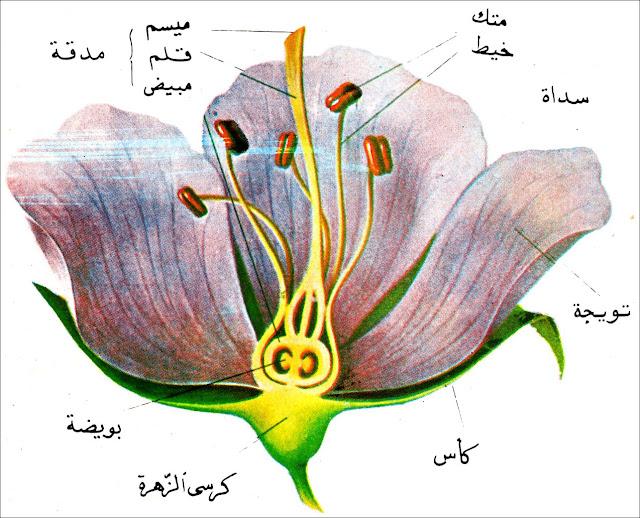 بحث عن تكاثر النباتات