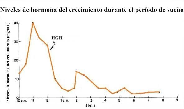 El período de sueño y su relación con la producción de hormona de crecimiento