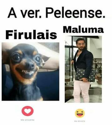 meme de maluma firulais