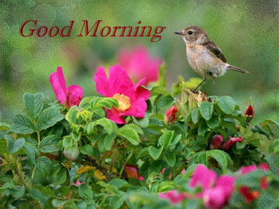 beautiful nature with good morning whatsapp pic